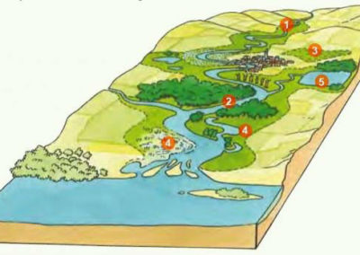 Préserver les zones humides et les haies
