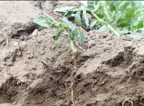 Agri, Viti, envie d'en savoir plus sur la biologie de votre sol ?