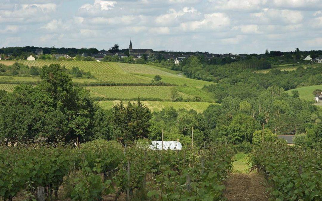 LE DEVELOPPEMENT DE L'AGRICULTURE BIO : DIAGNOSTIC ET OPPORTUNITÉS